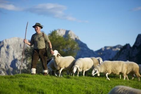 Pastir_z_ovcami_na_Strelovcu
