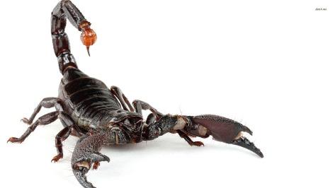 18540-scorpion-1920x1080-animal-wallpaper